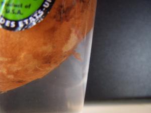 Sweet Potato Growing in Chlorinated Water