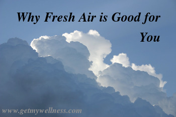 Do you know why fresh air is good for you? Plants, especially trees, are the best air conditioners.